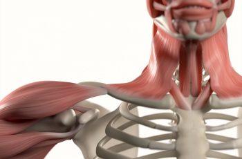 Qual é a importância da anatomia da boca e dos dentes para o corpo?
